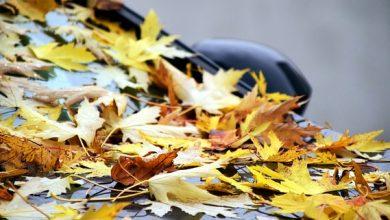 Photo of Listí ze stromů může poškodit lak vašeho aut